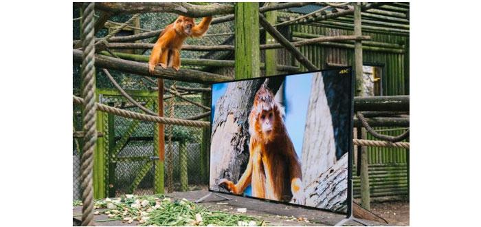 sony-lemuren
