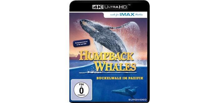 humpback-whales-uhd